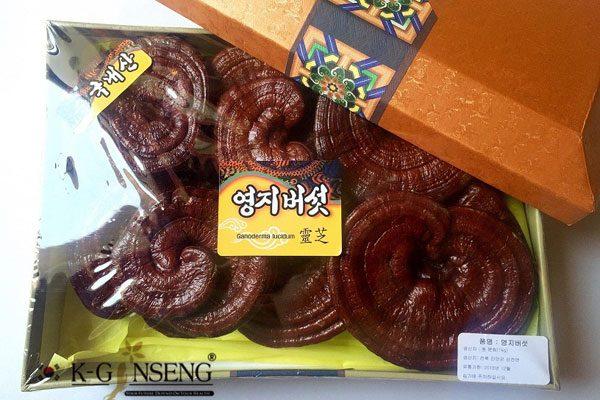 Nấm linh chi tai đỏ loại 1 hộp 1kg
