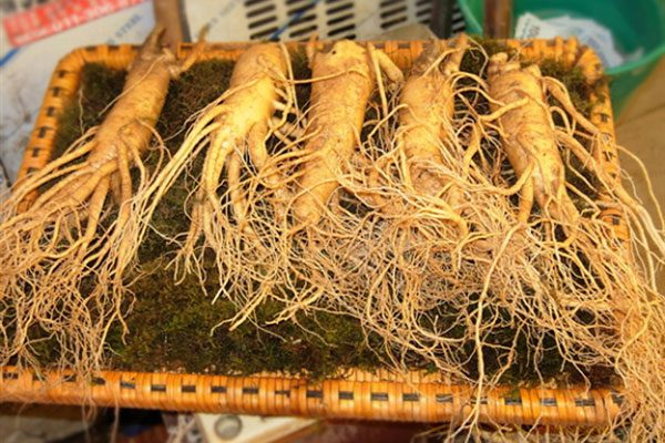 Nhân sâm tươi Hàn Quốc 5 củ / 1kg